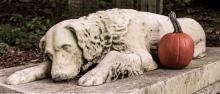 Dogs   Petslady.com