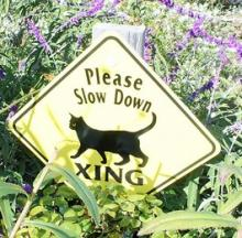 Signs Of The Beasts: The Top 10 Weird Animal Road Crossing Signs