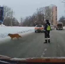 Kind Russian Policeman Helps Dog Cross Road Safely