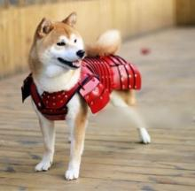 Samurai Armor For Pets Is Cutting Edge Cool