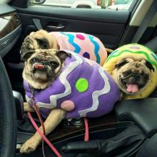Easter Puggs
