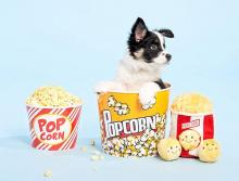 ZippyPaws Popcorn Food Buddies Burrow, Interactive Squeaky Hide and Seek Plush Dog Toy