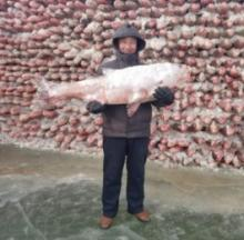 Chinese Fishermen Build Great Wall Of Fish