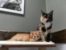 Mother's Day Cat and Kitten