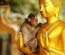 Buddha-Loving Monkey