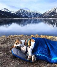 Camping Dogs and Cats