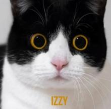 Mind-boggling 3D Izzy The Cat Is Too Cute To Be Creepy