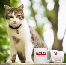 Larry The Cat Carries On As UK's Official Chief Mouser