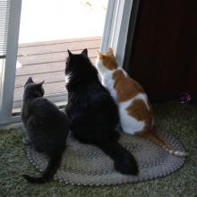 3 cats look out the window