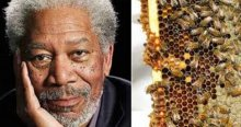 Actor Morgan Freeman, Savior of Honey Bees