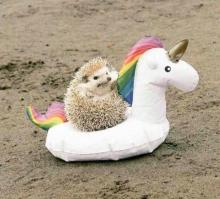 Unicorn Riding Hedgehog