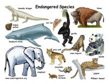 Endangered Species Just Became More Endangered