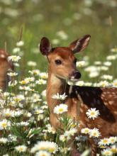 Gardeners Coexisting With Deer