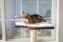 PetFusion's Ultimate Window Perch Cat Climber & Tree