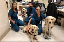 Service Dogs Arrive In El Paso To Comfort First Responders & Victims