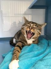 Laughing Cat`