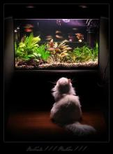 Fish Tank Floorshow