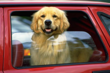 SpotOn, Ride-share For Dogs