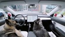 "Tesla's ""Dog Mode"""