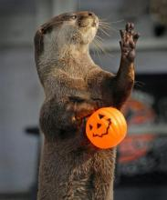 Trick or Treat Otter
