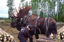 Working Moose