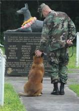 Veteran's Day Dog