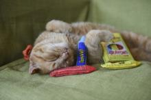 Ducky World Yeowww-Ola Crayons With Organic Catnip
