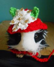 Guniea Pig Holiday Hat