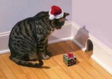 Christmas Mouse Trap