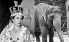 Queen Elizabeth Shows Leadership With Her Position On Trophy Hunting