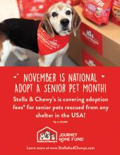 Stella & Chewy's celebrates adopt a senior dog month