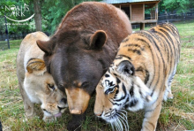Lion, Tiger & Bear Are BLT & BFFs, Oh My
