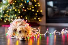 Threats To Our Pets Rise During The Most Wonderful Time Of The Year