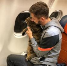 Fat Cat Switcheroo Costs Traveler All His Air Miles