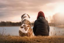 Should We Be Allowed Bereavement Leaves For Animal Loss?