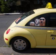 Collie Me A Cab: 10 Pre-PAW-sterous Pet Taxis
