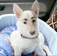 Stray Dog Parleys Awesome Eyebrows Into Internet Stardom