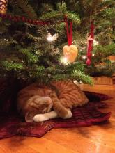 Christmas Cat Nap