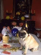 New Year's Pug