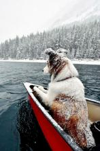 Canoeing Canine