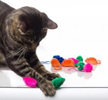Hartz Just For Cats Kitty Frenzy Cat Toys