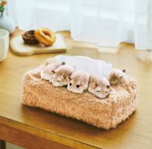 Sleeping Hamsters Tissue Paper Box Cover Is Something To Sneeze At