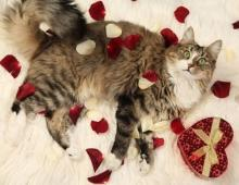 Romantic Cat