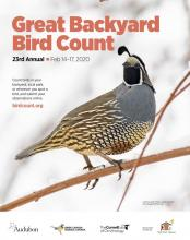 2020 Great Backyard Bird Count
