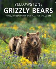 Yellowstone Grizzlies Overrules The White House