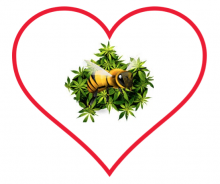 Happy Valentine Doo-Bee Day & Help Grow Bee Population
