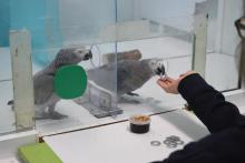 Behavioral experiment by Max-Planck-Institute for Ornithology at Loro Parque © Comparative Cognition Group