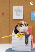 Guinea Pig Author