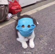 Critter-cal Mask: The Top 10 Surgical Mask-Wearing Dogs & Cats