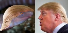 Trump-like 'Dermophis donaldtrumpi' The Harbinger Of Climate Change